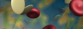 platelet2